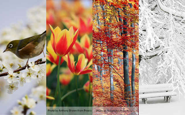 Pictures of: a bird in spring, flowers in summer, autums leaves, and frost in winter.